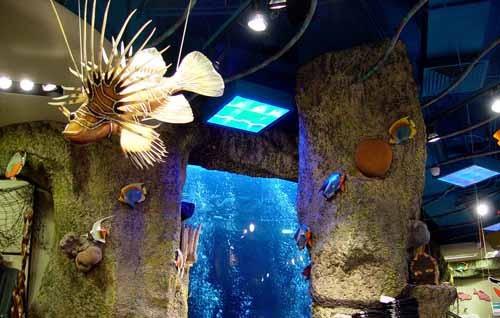 壁纸 海底 海底世界 海洋馆 水族馆 500_318