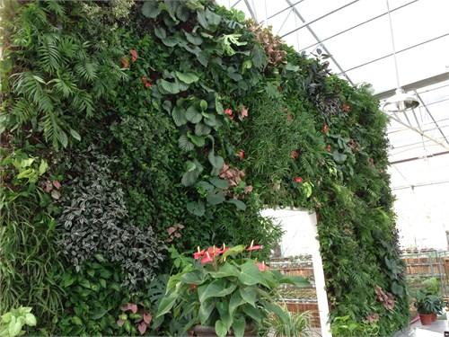 杭州热带雨林